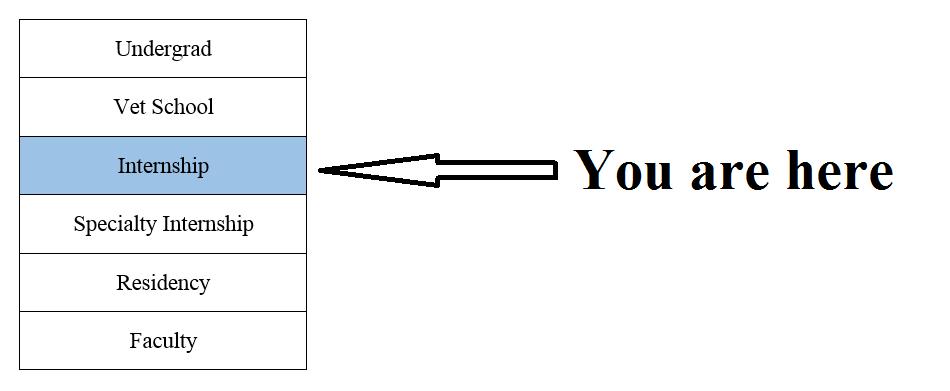 The Vetducator image of career progression with arrow at internship.